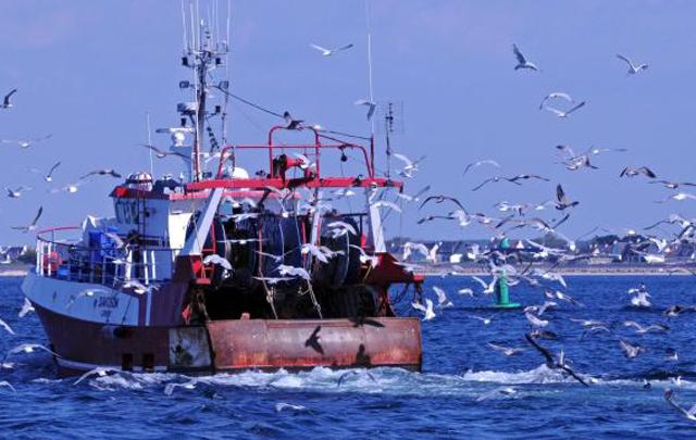 مراكب الصيد البحري