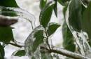 plants-frozen-in-ice-storm-21-w800-h600